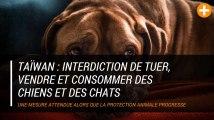 Taïwan interdit de tuer, vendre et consommer des chiens et des chats