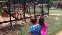 Deux filles provoquent un babouin au zoo, mais elles vont regretter amèrement leur geste