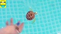 Tounboxing. Robo turtle. Turtle robot rofofish unboxing toys egg sur