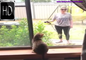 「猫のハプニング」水に落ちる猫たちの反応 - Cat's Happening The reaction of cats falling in the water
