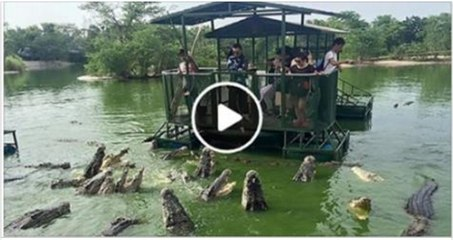 People surrounded in Crocodiles
