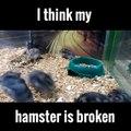 De - Ik ben toch niet gek - hamster! -D - Ik ben toch niet gek..-