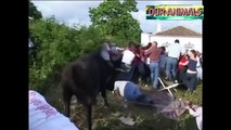 Most Awesome Bull Fight Fails - Top funny videos Try Not to Laugh - FUNNY CRAZY