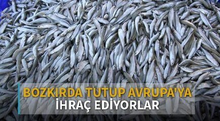 Bozkırın ortasındaki Yozgat'ta tuttukları balığı Avrupa'ya ihraç ediyorlar