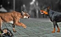 kup tanio dobra sprzedaż specjalne do butów Puma brutally attack a Doberman dog in the yard - video ...