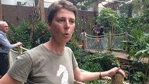 Le plus grand papillon d'Europe s'invite dans les jardins morbihannais au printemps