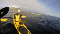 Kayakers Spot Basking Shark Near the Irish Coast