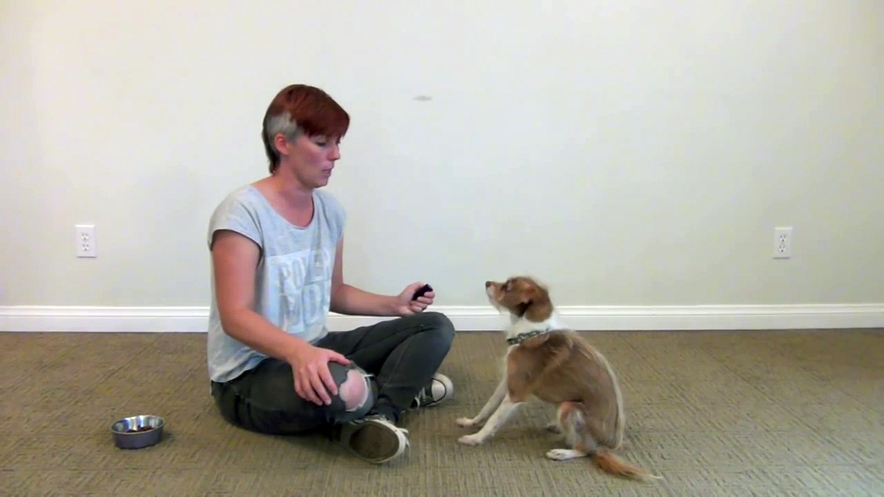 How to teach your dog his left paw from his right paw – clicker dog training-JtSe7xy0fI0