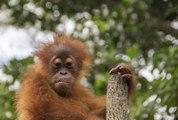 Monkey monkey humor