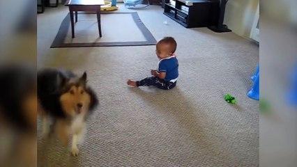 Un bébé est mort de rire en voyant le chien surexcité !
