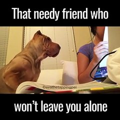 We all know someone this needy friend