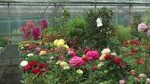 Hautes-Alpes : les conseils d'une horticultrice pour protéger vos fleurs du froid