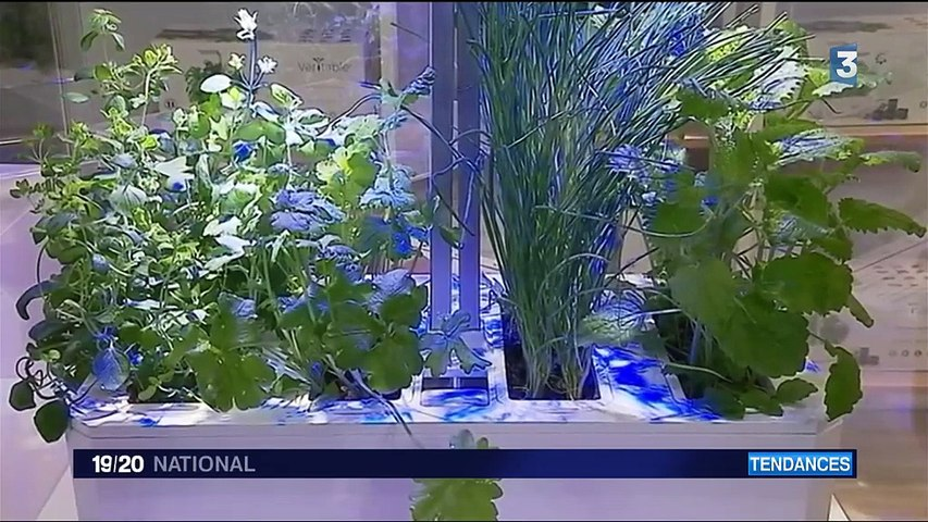 Tendance : les Français citadins à l'ère du végétal