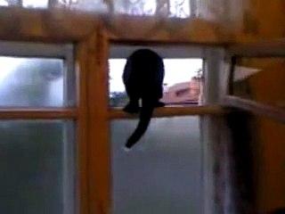 Este gato late como um cachorro, mas as coisas ficam ainda mais estranhas quando ele percebe que está sendo filmado.