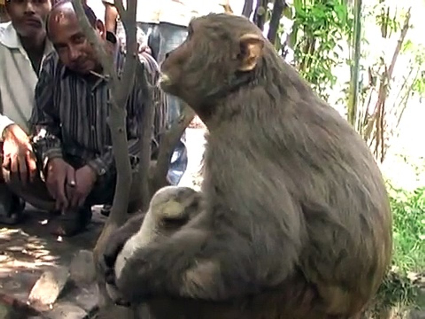 MONKEY BREAST FEEDING TO A DOG BABY | HOW CAN BE THEY SO KIND | MUST SEE PURE LOVE