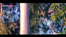 En Vahşi Hayvanlar- Zehir (Dünyanın En Zehirli 10 Hayvanı) [Türkçe Belgesel]