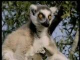 Les bébés animaux : les primates