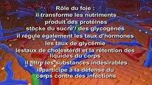 Cirrhose hépatique
