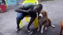 Voici ce qui arrive quand un africain embête un chien