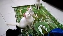 بلیاں کس طرح اللّه کا ذکر سُن کے جھوم رہی ہیں۔۔۔ سُبحان اللّه