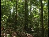 La Guyane : dans la forêt tambour battant