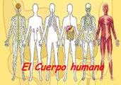 LOS 11 SISTEMAS DEL CUERPO HUMANO - CELULA - FIBRAS - TEJIDO - ORGANOS : DOCUMENTAL COMPLETO