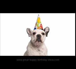 Hey Dog Happy Birthday