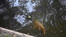 Square des Batignolles : les poissons !