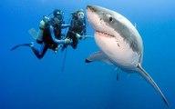 Plongée avec le grand requin blanc - Mission monstres marins