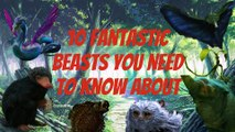 10 Fantastic Beasts You Need To Know - Fantastic Beasts Explained