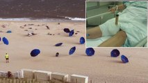 The Hidden Dangers of Beach Umbrellas and Tragedies They Have Caused