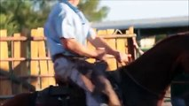 Horses Running, Playing and Jumping - Horses for Kids - Livasd234234