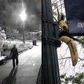 Bananas hung at American University [Mic Archives]