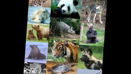 Children learning videos|Help to Save Endangered Animals|Jungle City|Kids educational videos|Daily motion videos