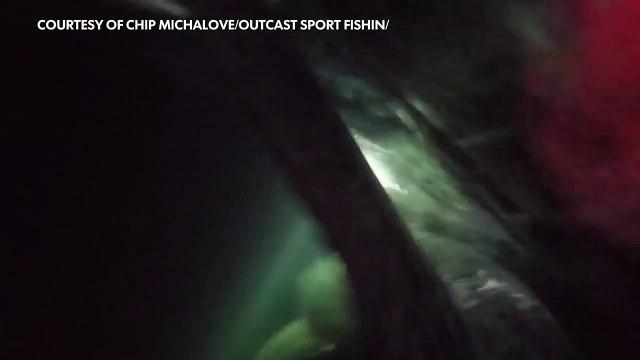 Fishermen tags huge great white shark off Hilton Head-SBClBL0Pik0