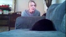 Ce chat sourd est perdu au réveil lol