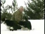 Chiens nordiques de chasse