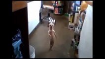 Funny  Dogs Dancing Compilation - Funny Animals Dancing!