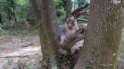 Primates attitudes 4K