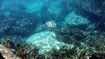 Thailand snorkeling Ko Phi Phi