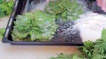 Salamura Yaprak Nasıl Yapılır _ Kış Hazırlıkları
