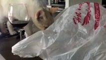 Quand ton chat débile devient fou en se coinçant la tête dans un sac plastique