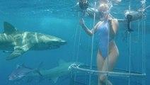 Shark Attack - Cam Girl Bitten off Florida Coast
