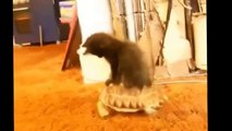 Best Funny Cats Fails Compilation ¦ Funny Cat Videos 2015 - Funny Pets, Funny Animals