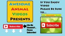 Best Funny Cats Fails Compilation Part 2 ¦ Funny Cat Videos 2015 - Funny Pets, Funny Animals