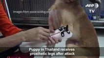 Puppy receives prosthetic pvdmghiey5uerj