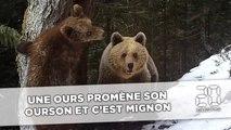 Pyrénées: Une ourse promène son ourson et c'est mignon