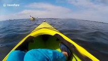 Cape seal hits kayaker in the head as it jumps out of the water