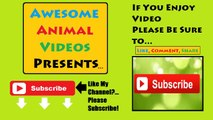 Funny Pets Chasing Laser Pointers Part 2 - Crazy Cats, Crazy Dogs, Funniest Animals, Kitty Cats
