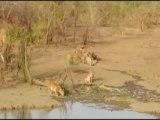Safari Burkina Faso Afrique